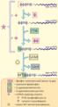 Cap mRNA.png