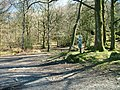 Car park, Dodgson Wood - geograph.org.uk - 1232727.jpg