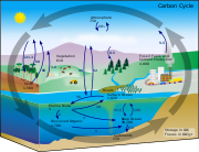 Diagram of the carbon cycle