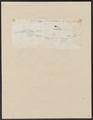 Carcharias glaucus - 1700-1880 - Print - Iconographia Zoologica - Special Collections University of Amsterdam - UBA01 IZ14100031.tif