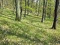 Carex praecox sl32.jpg