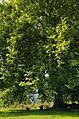 Carina1 www.bodengut.at.jpg