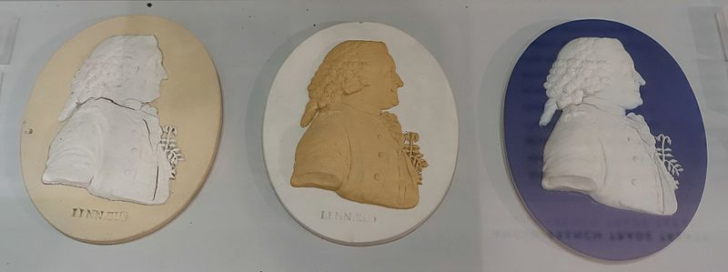 File:Carolus Linnaeus, from a medal by W. S. Taylor, c. 1777, all jasperware in different color combinations - Wedgwood Museum - Barlaston, Stoke-on-Trent, England - DDSC09627.jpg