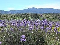 Carrizo Caliente Peak.JPG