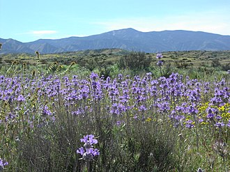 Caliente Range - Caliente Range from the Carrizo Plain, with Caliente Peak at top center