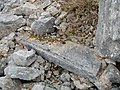 Carved Stone, Long Quarry.jpg