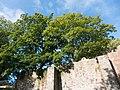 CastleGardensLisburn (4).jpg