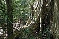Cat Tien Park, Vietnam, tropical forest, roots.jpg