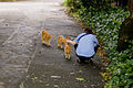 Cats live in Hibiya Park.jpg