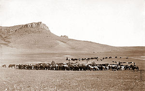 Great Falls, Montana - Cattle roundup near Great Falls, c. 1890