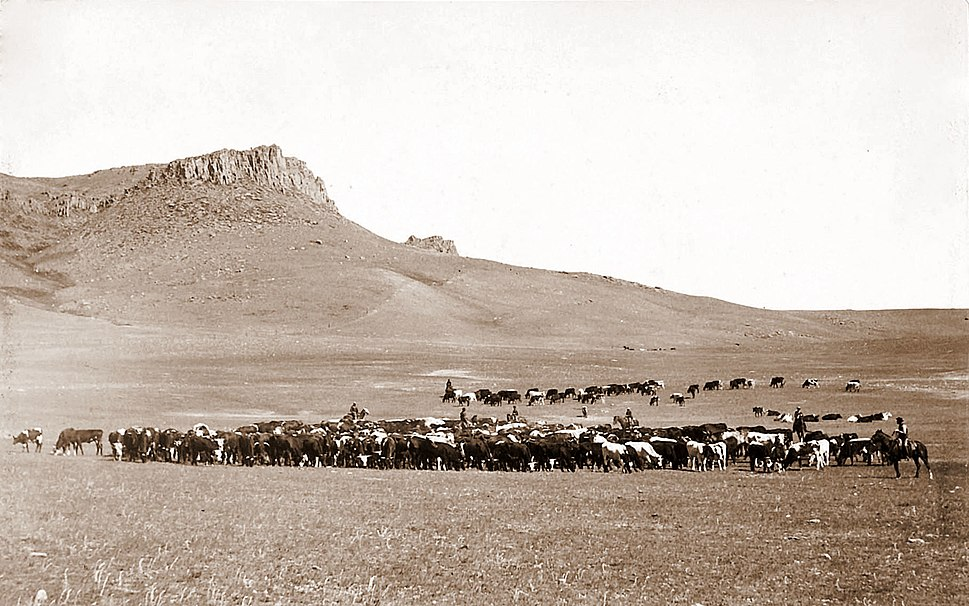 Cattle Roundup, Great Falls, MT, Geo B Bonnell, c1890