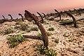 Cemitério de âncora da Praia do Barril.jpg