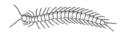 Centipede (PSF).png