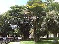 Centro Medico Docente La Trinidad (CMDLT) 2012 008.jpg