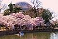 CherryBlossom2013 121.JPG
