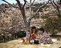 Cherry Blossom Festival 1955 - Orio, Yahatanishi Ward, Kitakyushu, Fukuoka Prefecture (7).jpg