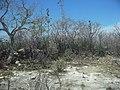 Chicxulub Puerto, Yucatán (14).JPG