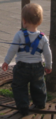 Child Harness (Standard Harness).png