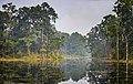 Chitwan swamp.jpg