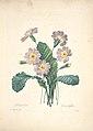 Choix des plus belles fleurs (Plate 95) (7851483082).jpg