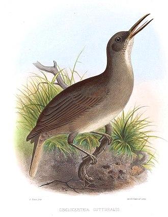 Grey trembler - 1869 illustration