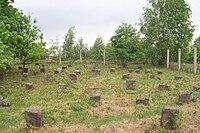 Cmentarz żydowski w sierpcu.jpg