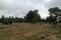 Cmentarz zydowski 6 - 640733.jpg