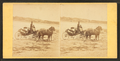 Coach on the beach, from Robert N. Dennis collection of stereoscopic views.png