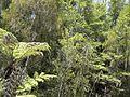 Coastal forest (6709459859).jpg