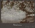 Collectie NMvWereldculturen, RV-A102-1-197, 'Kaaiman'. Foto- G.M. Versteeg, 1903-1904.jpg