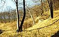 Colorful, woods Fortepan 70014.jpg