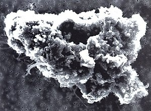 Comet dust - Microscopic view of comet dust particle