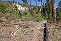 Continental Divide Trail - Flickr - aspidoscelis (41).jpg
