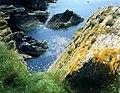 Cormorants (or shags) below Pen Morfa - geograph.org.uk - 758136.jpg