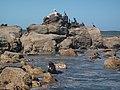 Costa de rocha en la punta verde, ακτή της Pότσα - panoramio.jpg