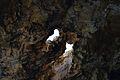 Cova Tallada, orificis al sostre.JPG