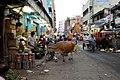 Cow (244225845).jpeg