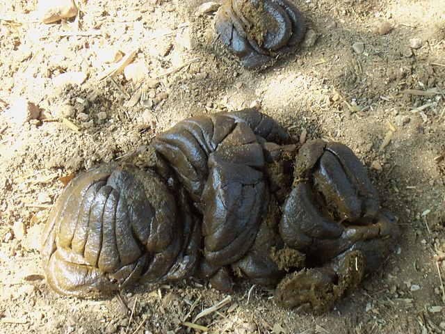 Cow dung By DORAI RAJ L (Own work) [CC BY-SA 3.0 (https://creativecommons.org/licenses/by-sa/3.0)], via Wikimedia Commons