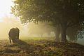 Cow under a tree, Ulefoss, Norway.jpg