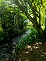 Creswell Gorge, Creswell Craggs, Notts (46).jpg