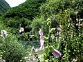 Crni Drim River 89.JPG