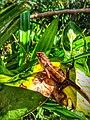 Crocodile of the Garden.jpg