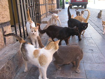 Crowd of cats.jpg