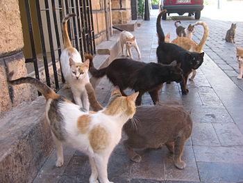 Alley Cat Rescue St Petersburg Fl