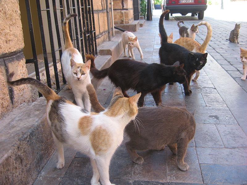 Cat Shelter Long Beach Ca