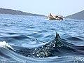 Cruise the Bay of Kotor.jpg