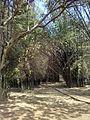 Cubbon Park Bangalore.jpg