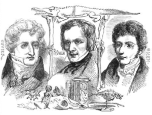 Orr's Circle of the Sciences - Engraving of Georges Cuvier, Richard Owen, Lorenz Oken. Originally at p. 161 of the first volume (1854) of Orr's Circle of the Sciences, it was reproduced as on this plate in Owen's The Principal Forms of the Skeleton and the Teeth (1856), which was the standalone publication of two of Owen's articles.