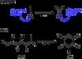 Cyclic hemiacetals.png
