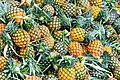 D85 0033 สับปะรด Pine Apple in Thailand Photographed by Trisorn Triboon.jpg